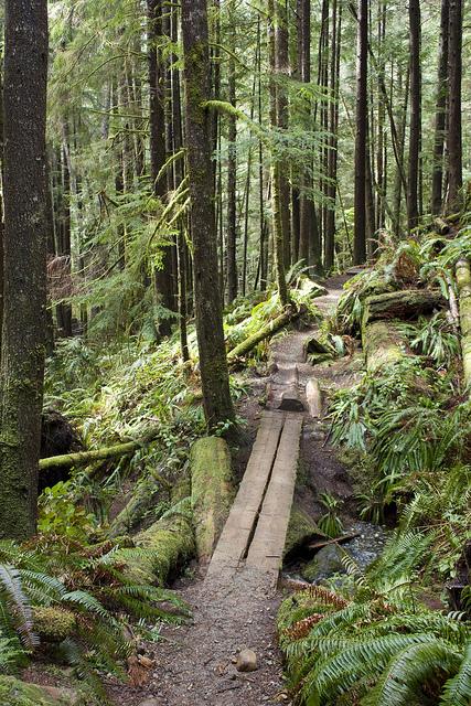 Juan de Fuca trail on Vancouver Island